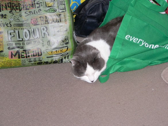 Stan in Bag