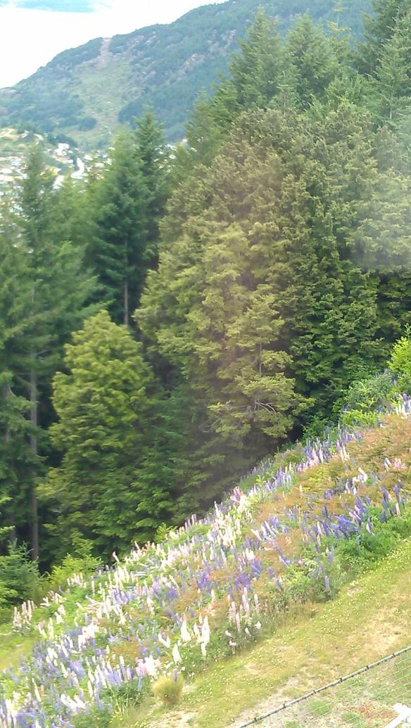 Gondola wildflowers