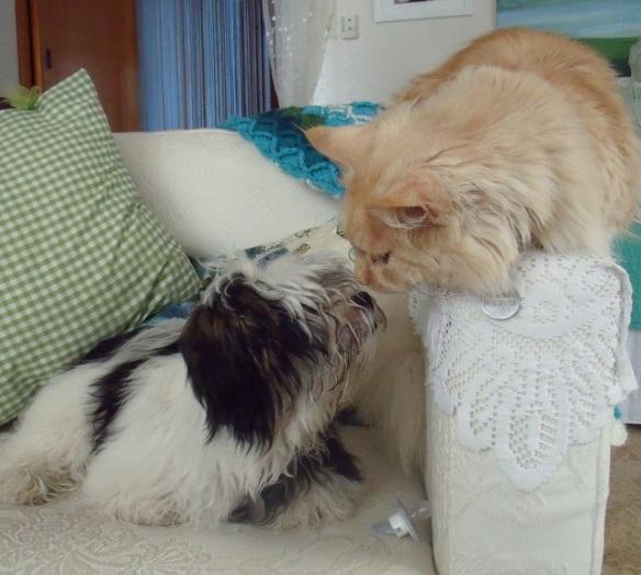 First kiss 28 8 14