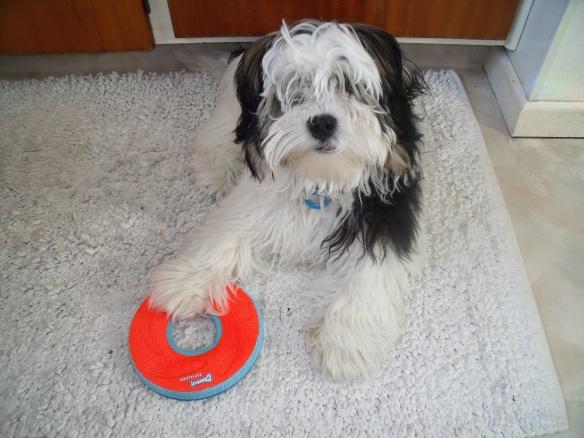 Frisbee 5 9 14