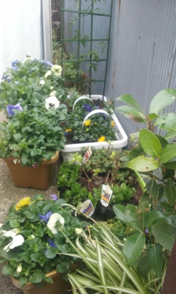 sept garden 2