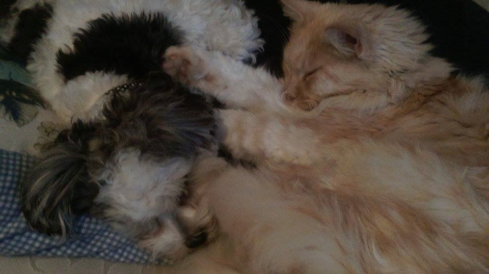 O sleeping duo June