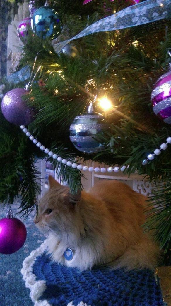 O under tree Dec 15