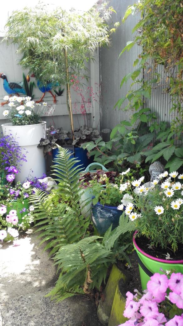 garden 2 Jan 18